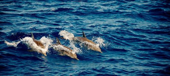 Dolphins Cayo Sabinal Cuba